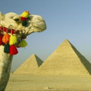 Camelo com piramides