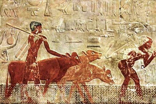 cena de pastorícia , mastabas de Sakkara