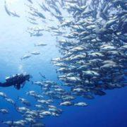 Mergulho em HSark Reef em Sharm El Sheikh