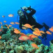 Diving em Sharm El Sheikh