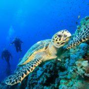 Viagem de Mergulho no Mar Vermelho