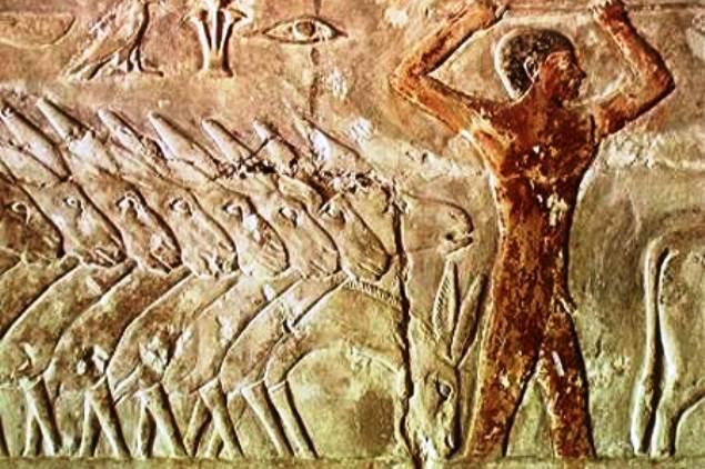 cena na mastaba de Meriruka em Sakkara, Egito